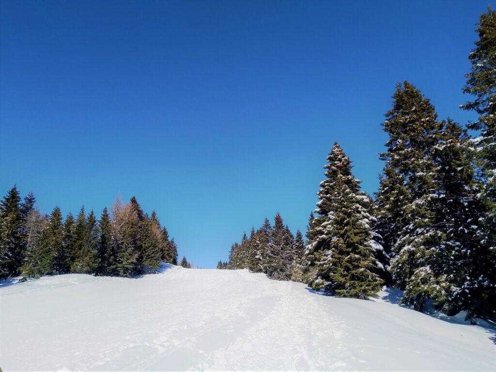 montagna di Erica Marconato